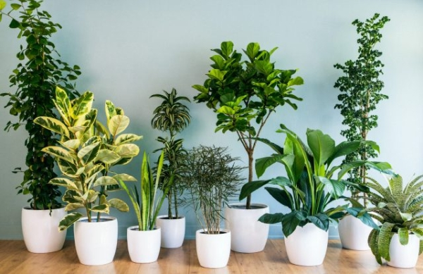 Top 10 Indoor Plants that Produce the most Oxygen